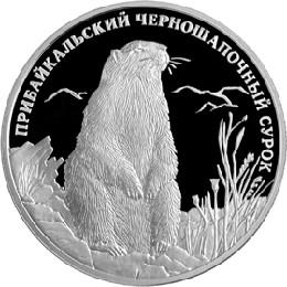 Прибайкальский черношапочный сурок. Красная книга